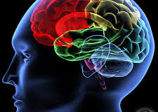 Discovery Science Channel – The Human Brain !